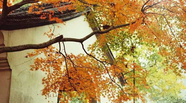 任性规定15条街不扫落叶,只为你保留一方秋色。...