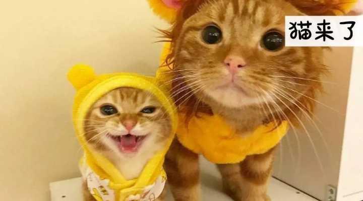 """""""人类为什么要主动讨好猫?"""""""