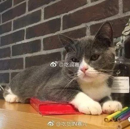 给这家店疯狂打call,太适合小文艺吸猫人群了 !!!