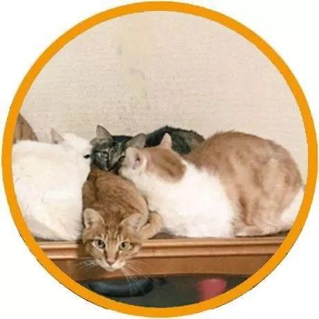 网友回家刚开门,看见家里猫的表情就知道自己忘了...