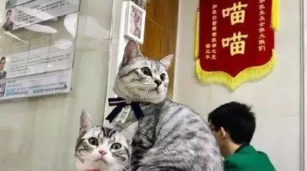 """被猫咬是小事,兽医最怕被人""""咬"""""""