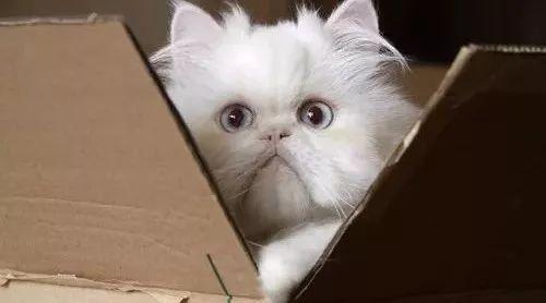 不剁手的好猫砂,真的存在吗?