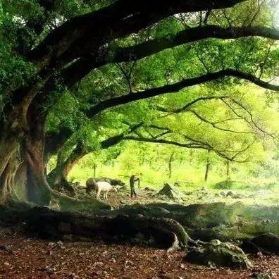 """佛教中的""""五树""""和""""六花"""""""