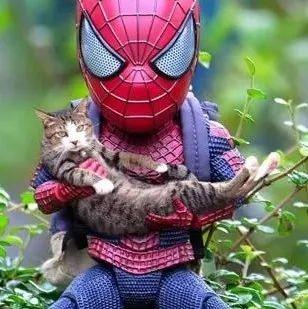 主人买了个蜘蛛侠手办后,利用PS技术跟猫合照,...