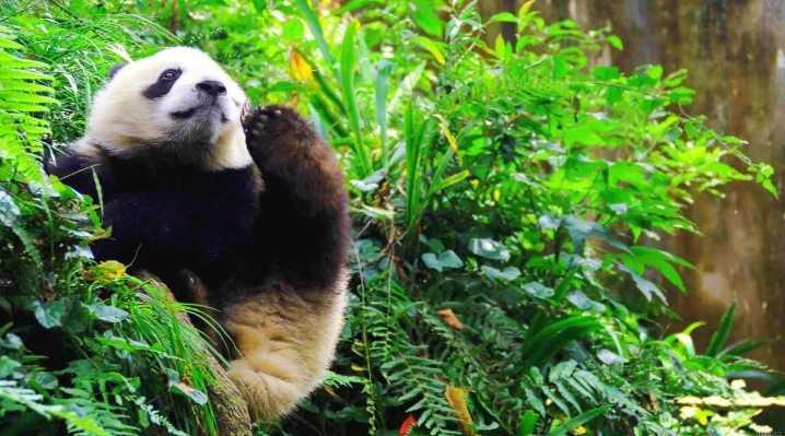 把家搬到中国最美观景平台边,他和熊猫做起邻居,...