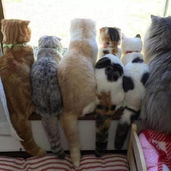 一排肥猫挤在窗边,回头一看萌化了!