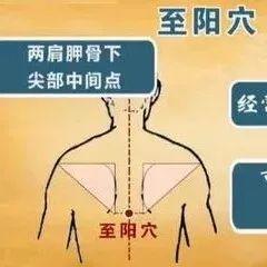 【每日一穴】至阳穴:胸胁胀痛,腹痛黄疸,咳嗽气喘