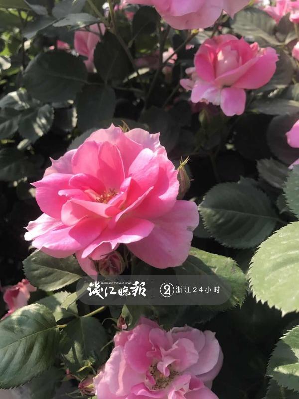 微信图片_20190518173659.jpg