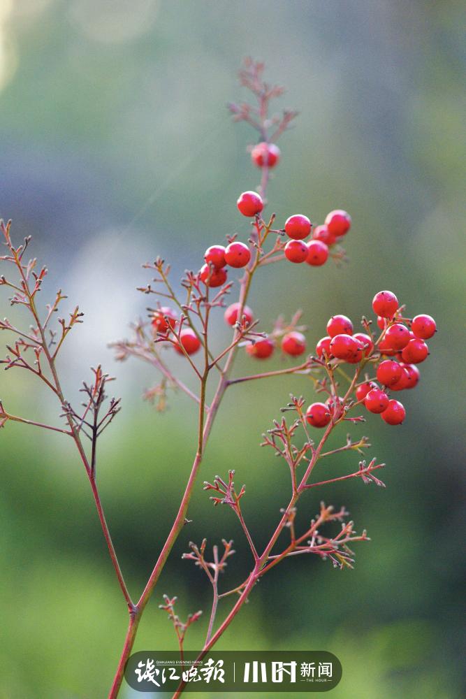 圆忆冰:不能出小区,大景拍不了,在小区花坛、草地拍拍小景。 (3).jpg