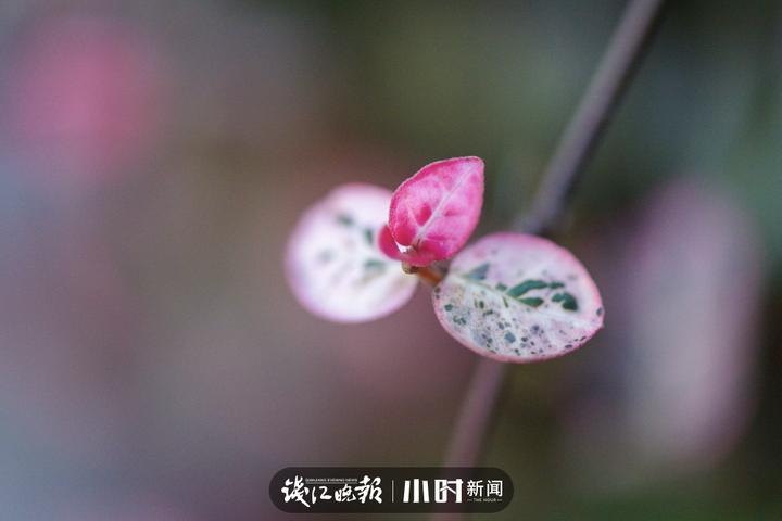圆忆冰:不能出小区,大景拍不了,在小区花坛、草地拍拍小景。 (7).jpg