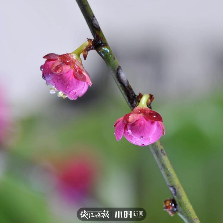 西湖若农(慧心).jpg