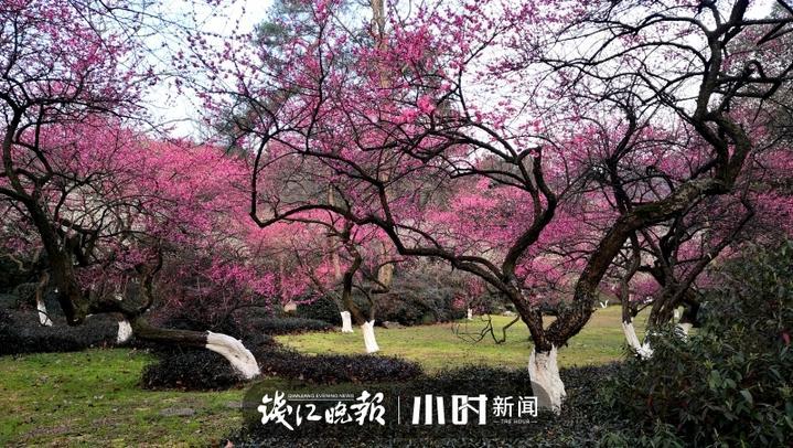 微信图片_20200220114539.jpg