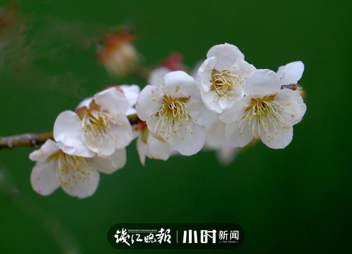 微信图片_20200220113129.jpg
