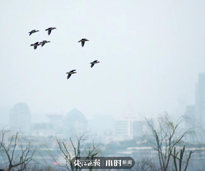 西湖的早晨 杭州老潘.jpg