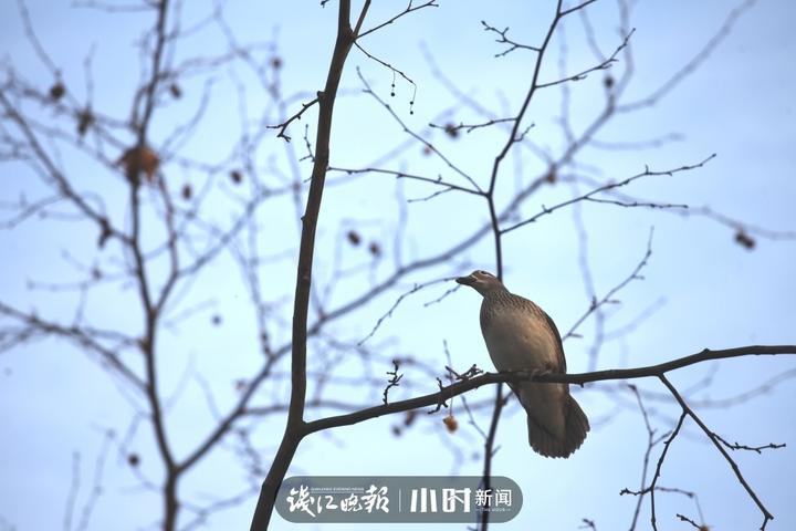 江志清 (1).jpg