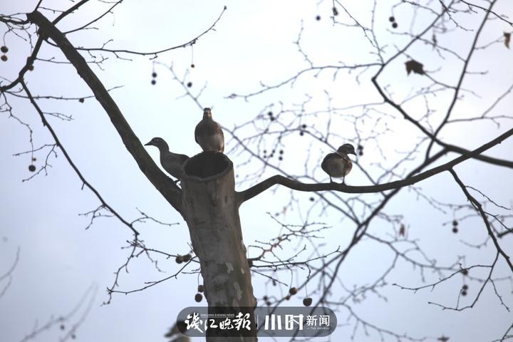 江志清 (7).jpg