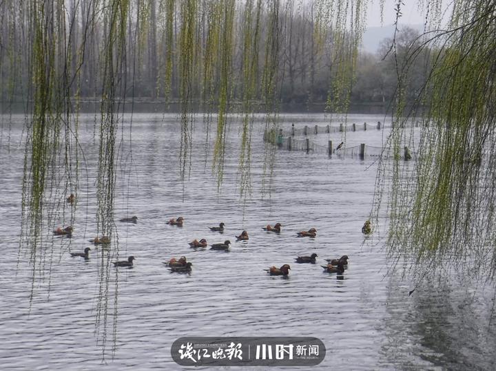 温称福 (2).jpg