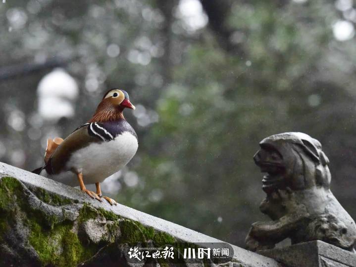 长孙无名 (2).jpg