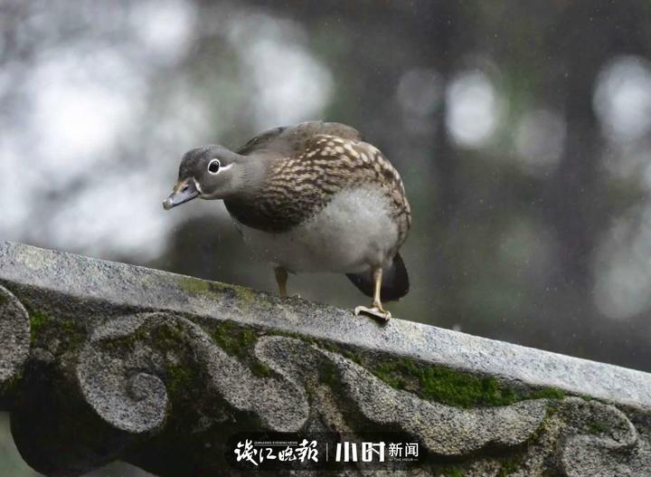 长孙无名 (3).jpg