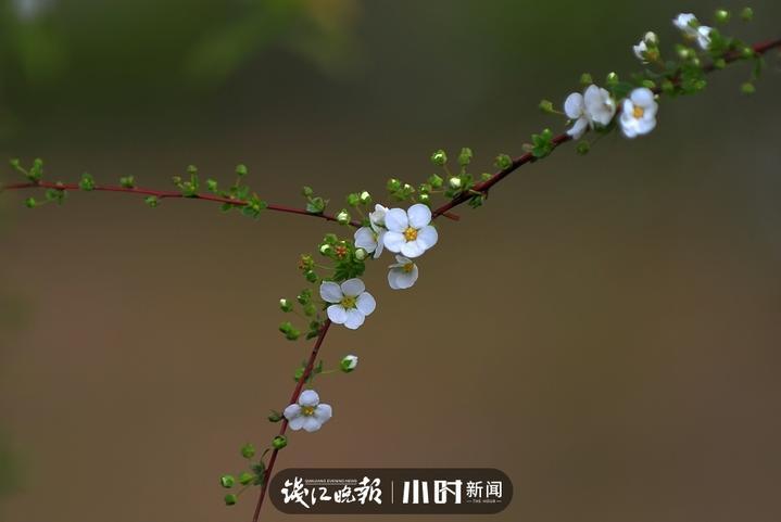 安安 (7).jpg