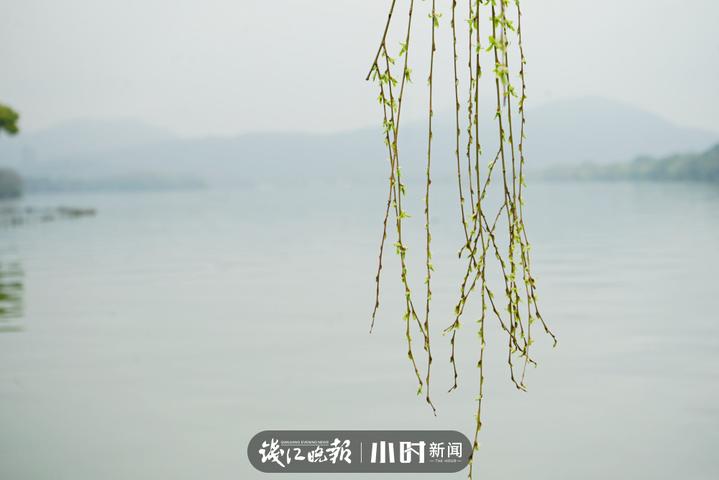 三月雨濛濛,西湖的柳树发芽了 Autumn果果_副本.jpg