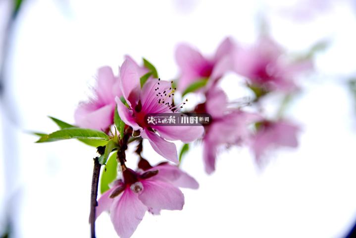 微信图片_20200302152810.jpg