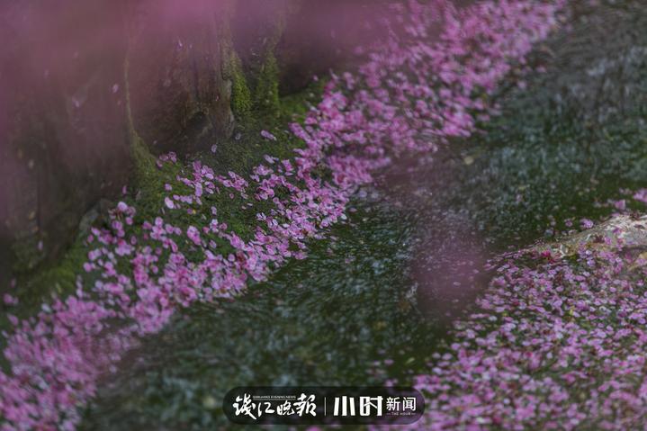 黎子 长兴东方梅园 (1).jpg