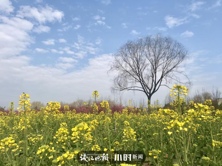 韩青 这里的春天最美丽——紫金港河 (2).jpg
