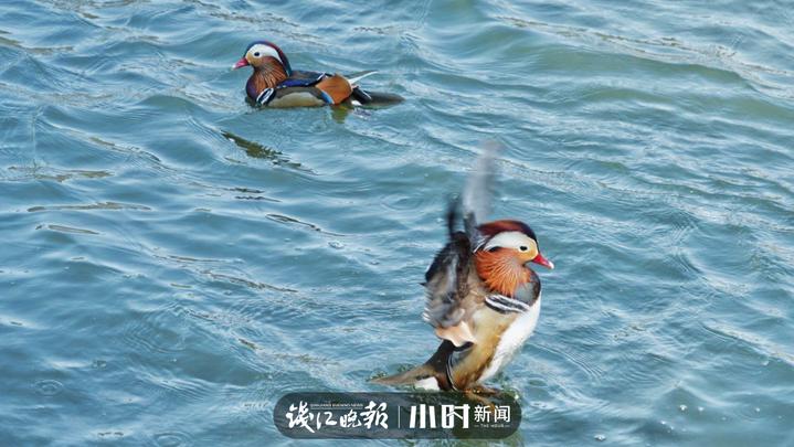 青椒 (1).jpg