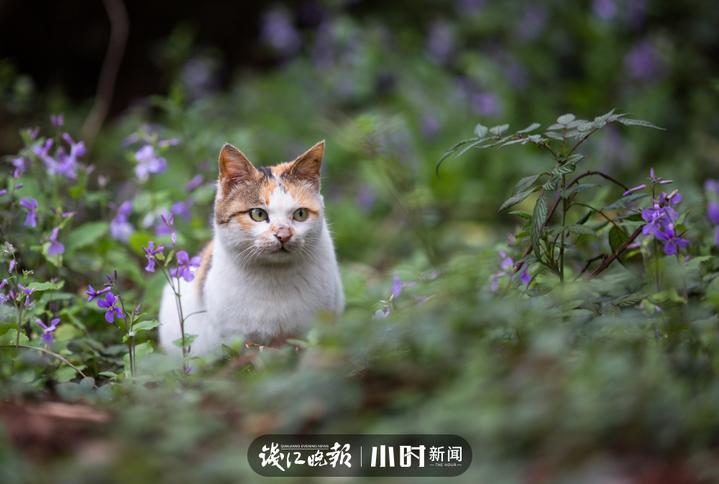 吴佩荣 (4).jpg