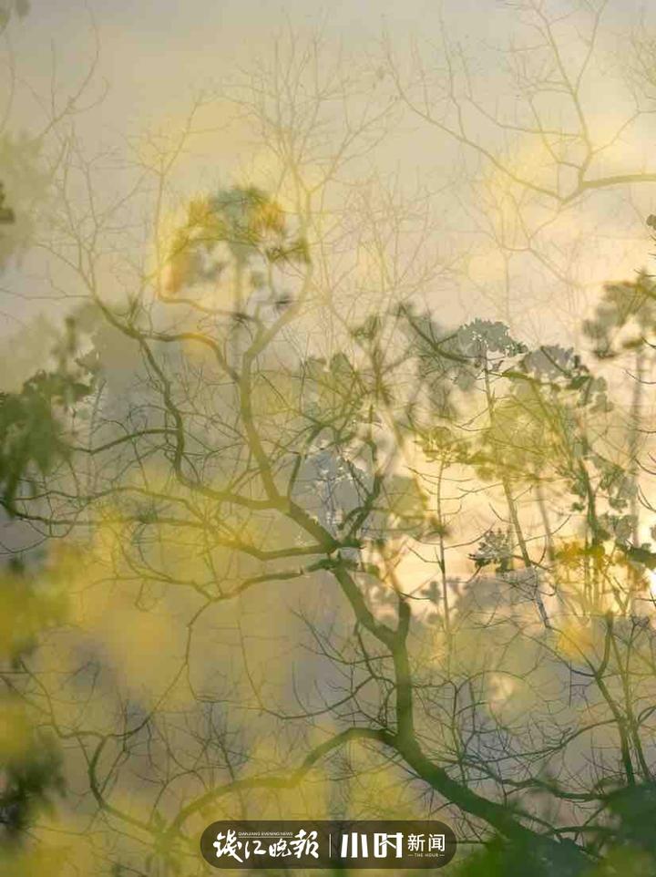 春意:色彩浓郁西溪洪园 周日公园里游人如网,春天的油菜花盛开。 清苹果摄影 (2).jpg