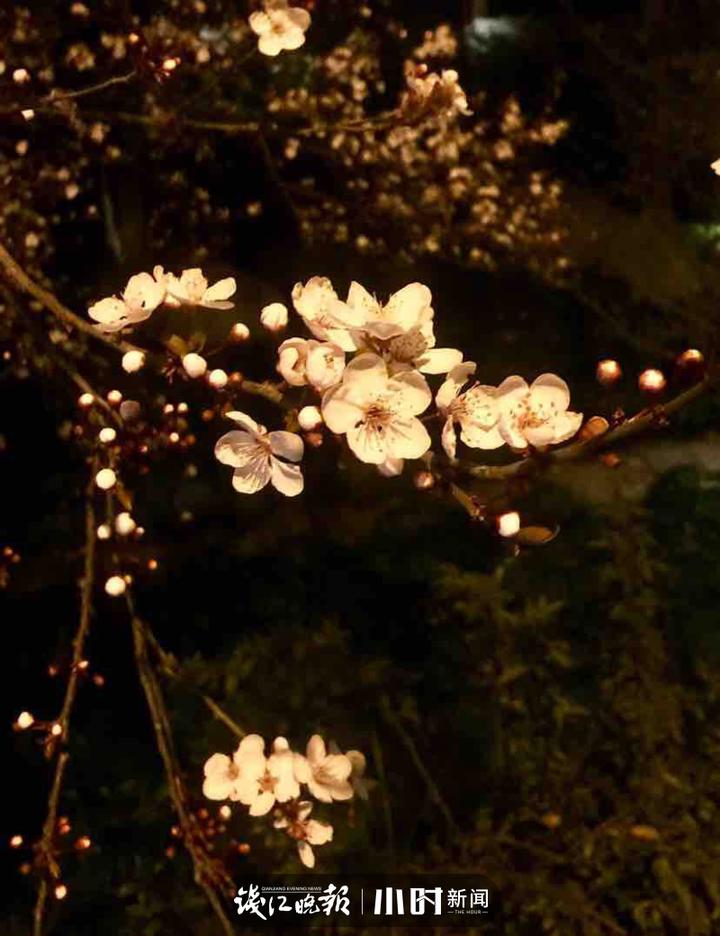 春天来了,唤醒生命所享有的美好 18058806909.jpg