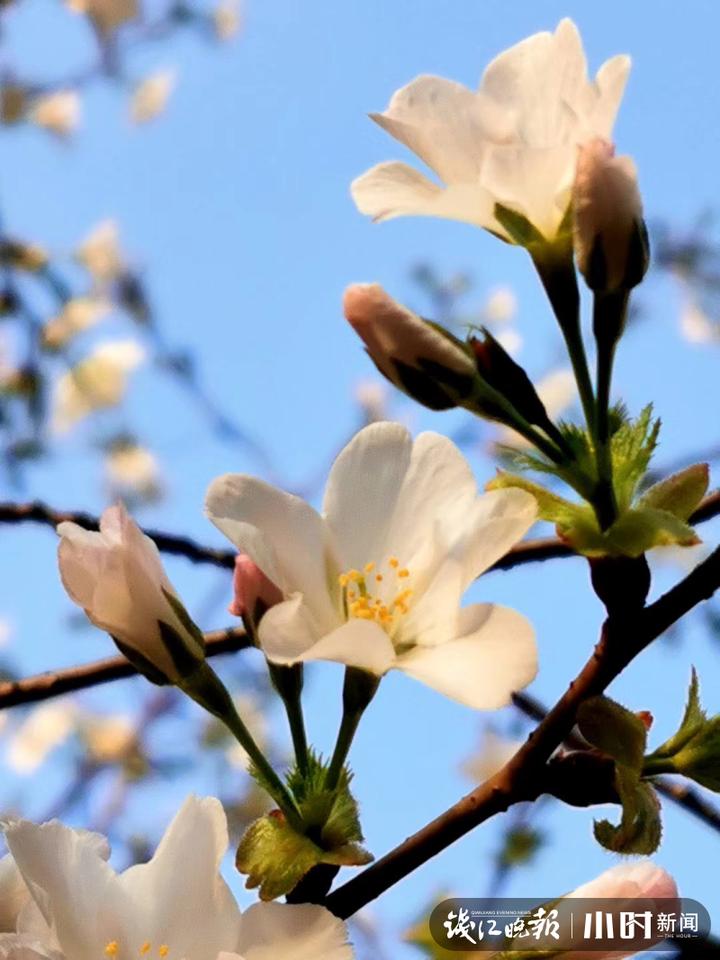《春可喜》3.JPG