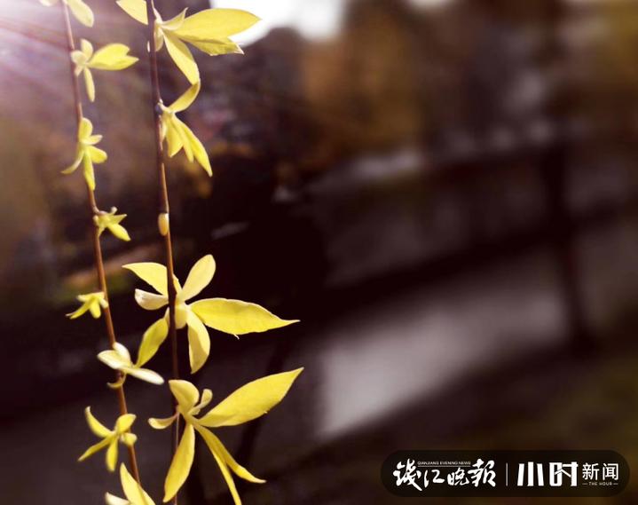 《春可喜》4.JPG
