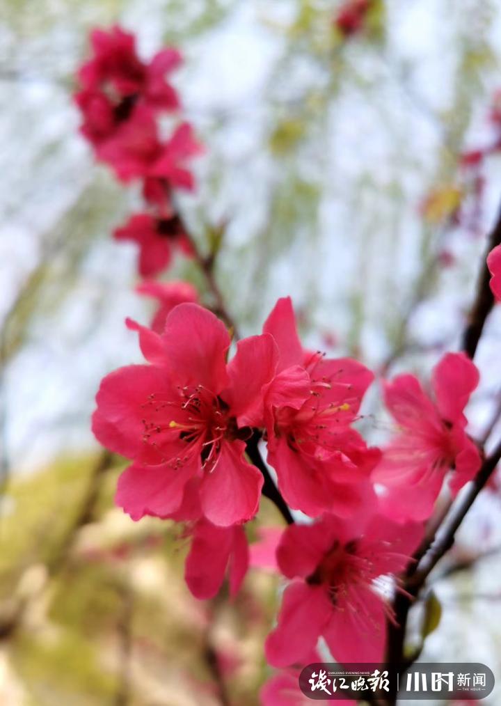 《春可喜》6.JPG