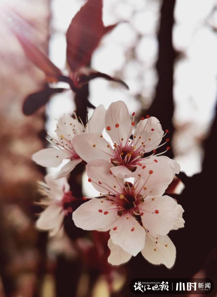 《春可喜》8.JPG