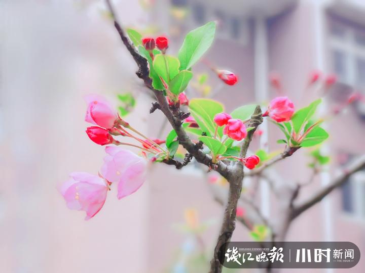 2摄于古新河,沈塘桥社区吕蒙.jpg