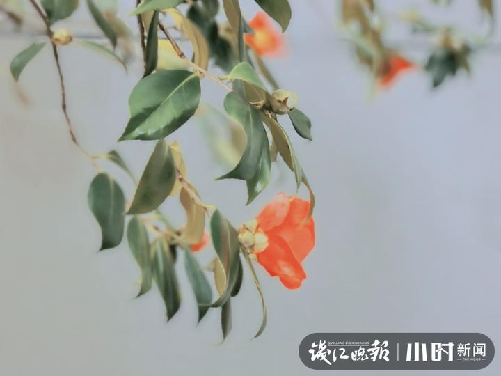 5摄于古新河,沈塘桥社区吕蒙.jpg