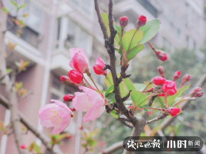 7摄于古新河,沈塘桥社区吕蒙.jpg