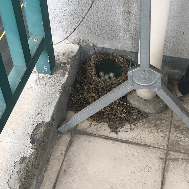 鸟巢2.jpeg