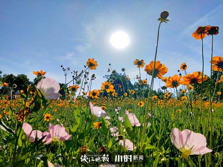 五月的花 作者 程艳艳(手机拍摄).jpg