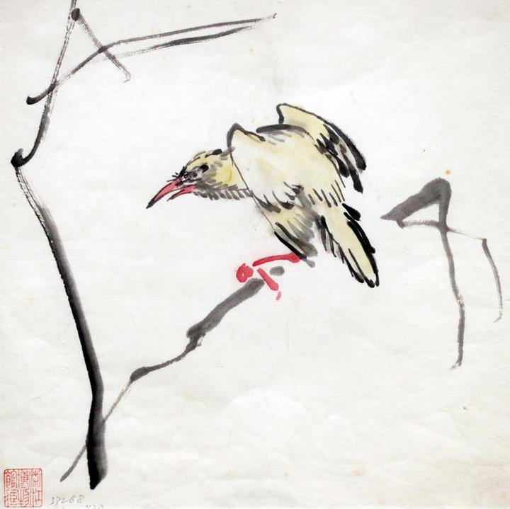 黄鸟6.jpg