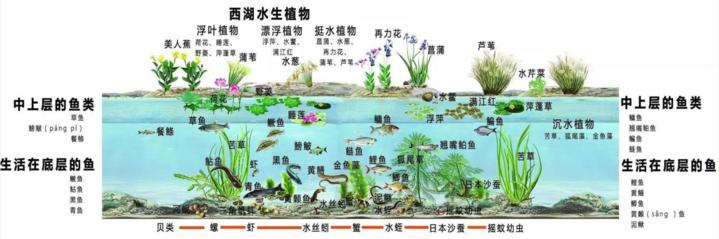 西湖里的动植物.jpg