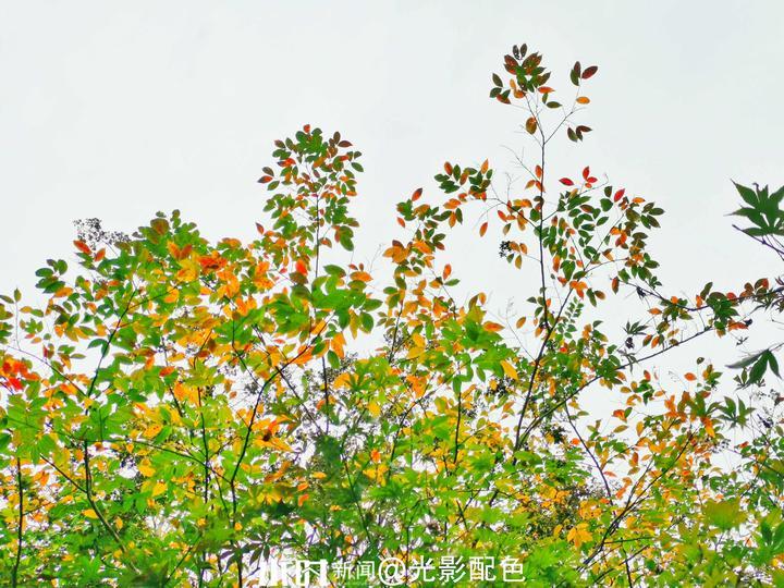 树叶3.jpg