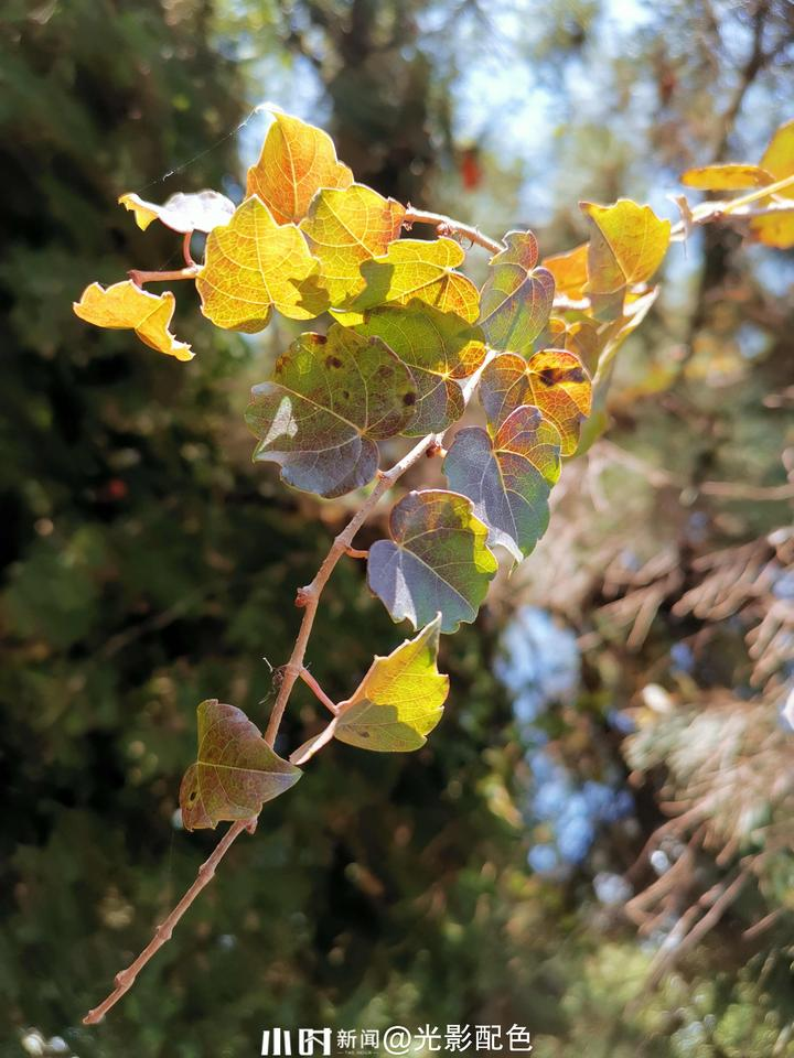 树叶5.jpg