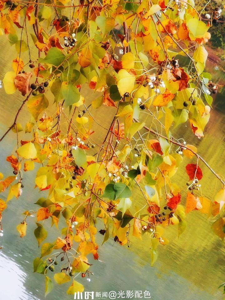 树叶1.jpg