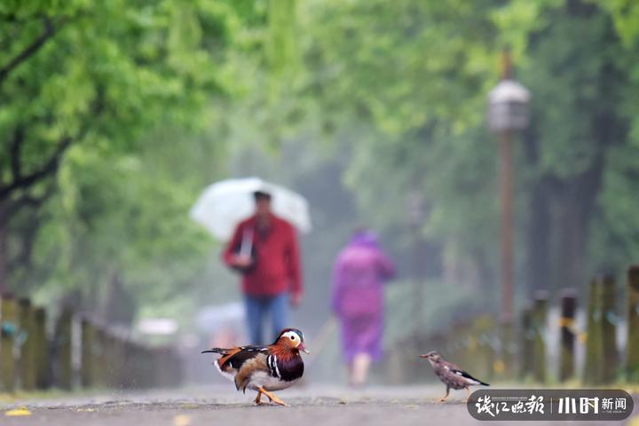 2 金奖 《老哥,秋雨下不停啊!小雀与鸳鸯的对话》,作者:戴文昌 18857116999.jpg