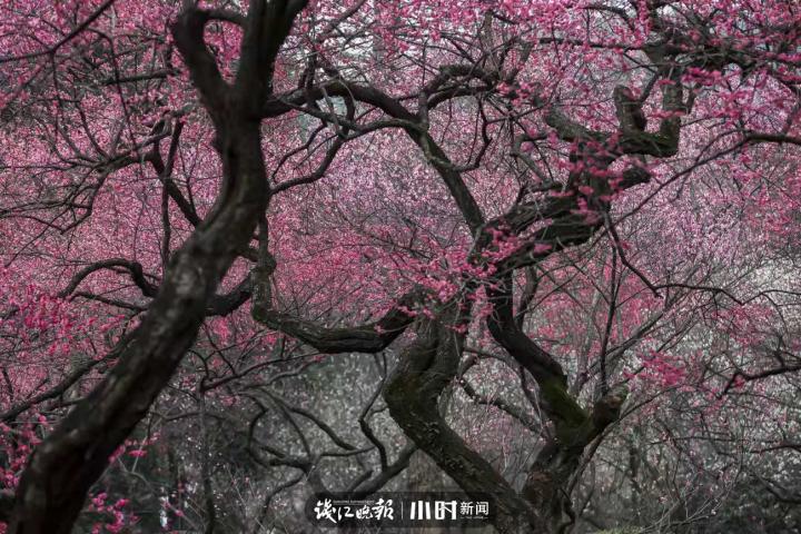 勾留堂-沙鸥 (3).jpg
