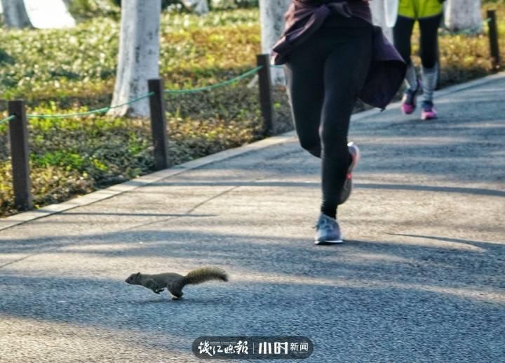181。。。。0385 各跑各 一只松鼠横跑过马路,背景是正在跑步的人,大家都在朝着自己的方向跑,各跑各。.jpg