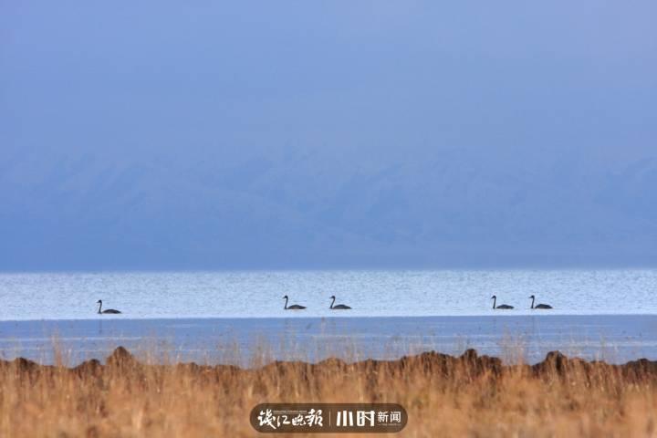 2016年在赛里木湖,早起的打鱼人和白天鹅.jpg